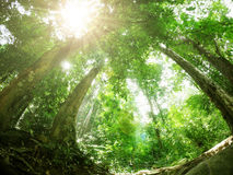 Green forest with sun ray. Rain forest in South of Thailand Royalty Free Stock Photography