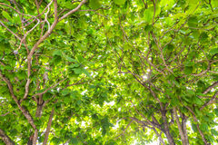 Green forest with sunlight Royalty Free Stock Image