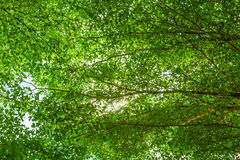 Green forest with sunlight Stock Image