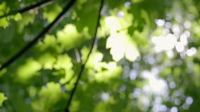 Green forest with sunlight stock footage
