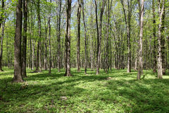 Green forest on a sunny day. Royalty Free Stock Photography