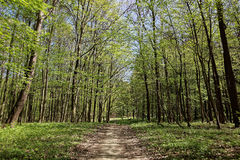 Green forest on a sunny day. Royalty Free Stock Photos