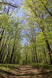 Green forest on a sunny day. Royalty Free Stock Photo