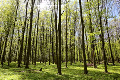 Green forest on a sunny day. Stock Images