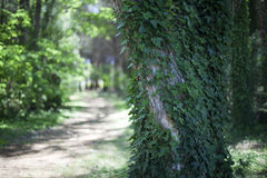 Green forest on a sunny day Royalty Free Stock Photos