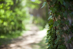 Green forest on a sunny day Royalty Free Stock Photo