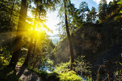 Green forest with sunrays Stock Photo