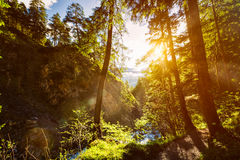 Green forest with sunrays Royalty Free Stock Photo