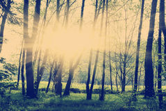 Green forest at sunset. Instagram tone green forest at sunset sunrise royalty free stock image