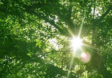 Green forest at sunset sunrise sun and sunbeams stock photos