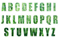 Green forest text on white background Royalty Free Stock Photography