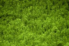 Green forest texture royalty free stock images