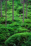 Green forest. With thick bushes Stock Images