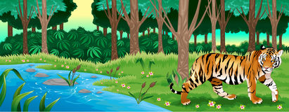 Green forest with a tiger. Vector cartoon illustration Royalty Free Stock Image
