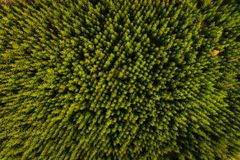Green forest, top view Royalty Free Stock Photography