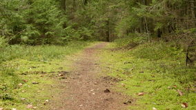 Green Forest Trail. Autumn daytime. Smooth dolly shot. Green Forest Trail - autumn daytime. Smooth dolly shot stock video footage