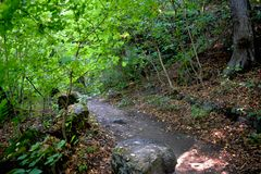 Green forest trail with mossy stones royalty free stock photos