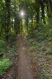 Green Forest Trail, Nature Background Royalty Free Stock Image