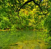 Green Forest Tranquility. Serenity in a tropical forest overlooking a calm river Stock Image