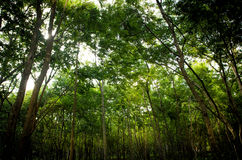 Green forest tree background Stock Photography