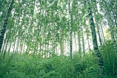 Green Forest Trees Royalty Free Stock Photo