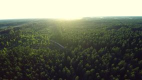 Green forest trees. Aerial footage stock footage