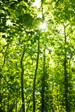 Green forest trees background. Natural floral environment, leafy tree woods, fresh spring plant growing outdoor, lush foliage brunches with bright sun light Stock Images