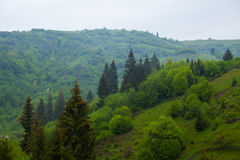 Green forest with trees and bushes on the hill Stock Photography
