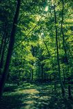 Green forest Stock Photography