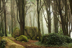 Green forest trees with huge rocks Royalty Free Stock Photography