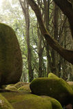 Green forest trees with huge rocks Stock Photos