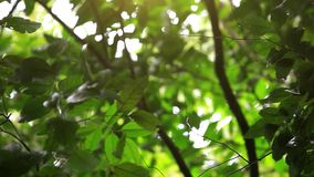 Green forest with trees and leaves with bright sun. In jungle. 1920x1080 stock footage