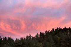 Green Forest Trees Under Pink and Blue Sky during Sunset Stock Images