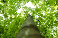 Green forest treetop shot Royalty Free Stock Photos