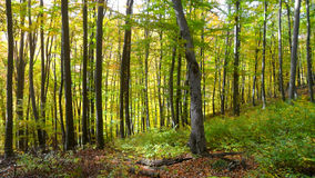 Green forest. Trip into the autumn forest royalty free stock photography