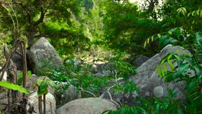 Green forest in tropical jungle and large stones in parched mountain river. Tropical forest in jungle mountains. Beautiful landscape wild nature stock video footage