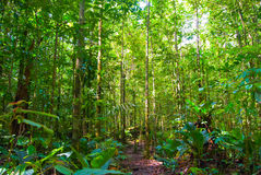 Green Forest. Green tropical forest in latin america jungle Stock Photo