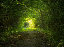 Green forest tunnel. In summer Royalty Free Stock Photo