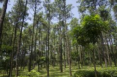 Green forest under the blue sky royalty free stock photography