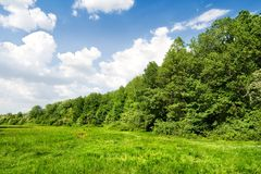 Green forest under blue sky with clouds Royalty Free Stock Images