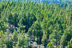 Green forest under the sun Royalty Free Stock Images