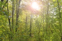 Green forest view and lens flare green tree natural outdoor park Royalty Free Stock Photography
