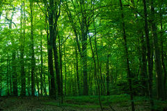 Green forest. View  at sunset inside forest of La Cambre Park, Brussels, Belgium Stock Photography