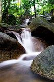 Green forest and waterfall Stock Images