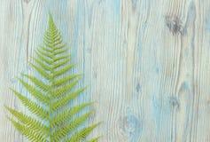 Green forest wild fern border, monogram Royalty Free Stock Photography