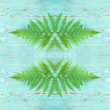 Green forest wild fern border, monogram Stock Photo