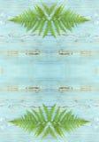 Green forest wild fern border, monogram Royalty Free Stock Image