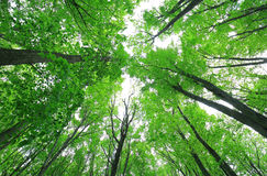 Green forest wood in spring Stock Photo