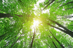 Green forest wood in spring Royalty Free Stock Photography
