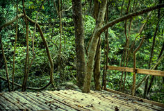 Green forest with wooden floor background Royalty Free Stock Image